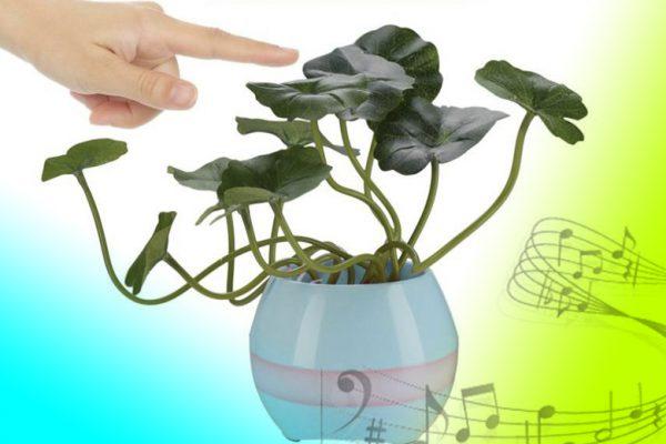 музыкальный цветочный горшок